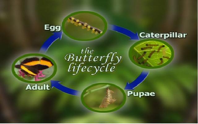 butterfly_house.jpg