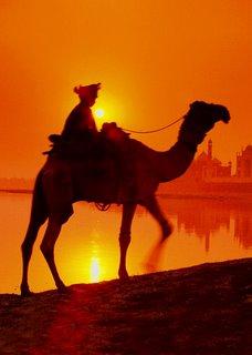 camel_photo.jpg