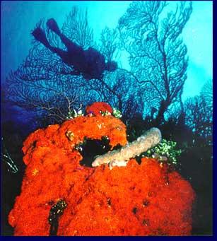 diver_2.jpg