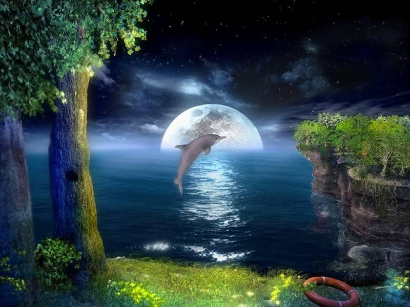 dolphins3d.jpg