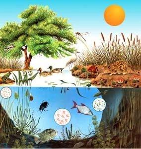 ecosistema(1).jpg