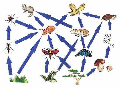 foodweb(5).jpg