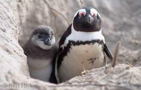 funny_penguin_ad32890n.jpg