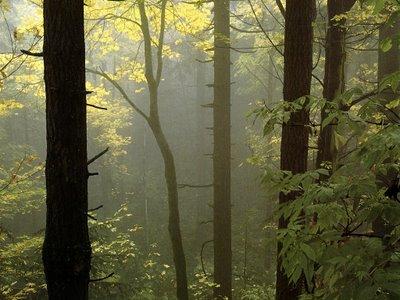 jlm-oregon-forest_fog.jpg