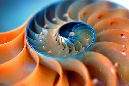 nautilus_flickr.jpg