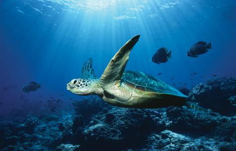 ocean-turtle(3).jpg