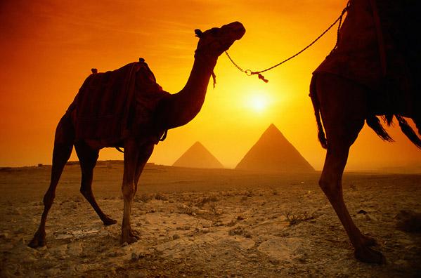 photo_lg_egypt(2).jpg
