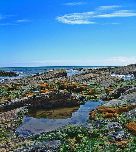 pretty_intertidal_zone.jpg