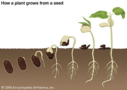 The Journey From A Seed To A Plant