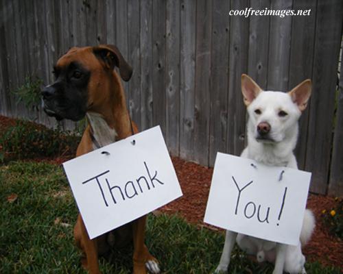 thank_you(2).jpg
