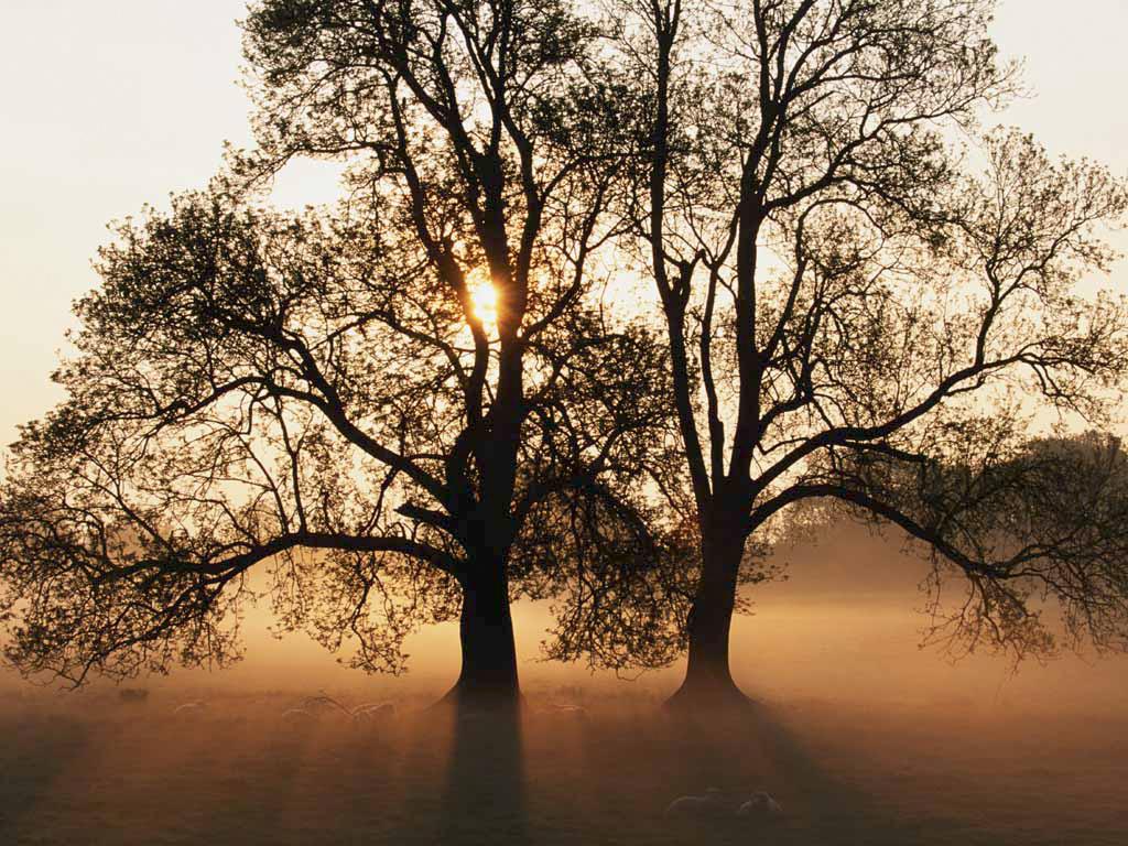 tree(53).jpg
