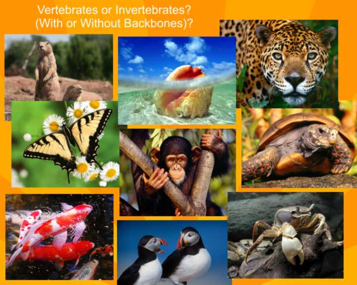 Living Things - Vertebrates Or Invertebrates?