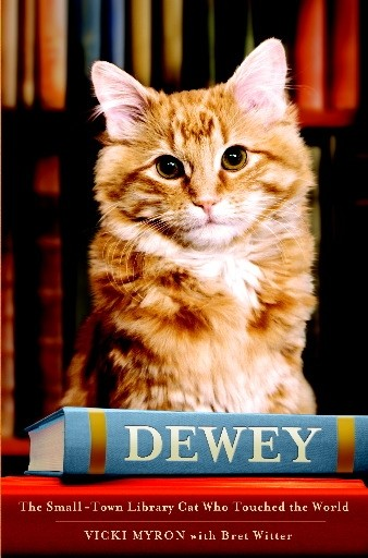 Dewey The Cat'S Library Adventure