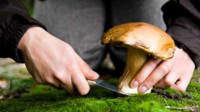 Exploiting Fungi For Food