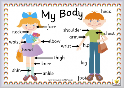 Let'S Explore Our Body Parts