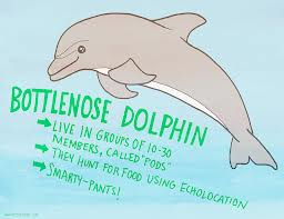 The Intel Of  Bottlenose Dolphins