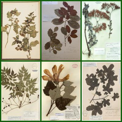 Herbarium Making