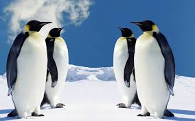 Fun With Penguins