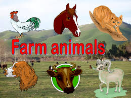 The World Of Farm Animals