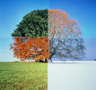 Seasons Effects On Nature