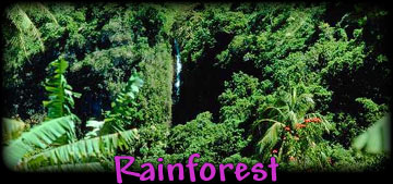 Rainforest/Biomes