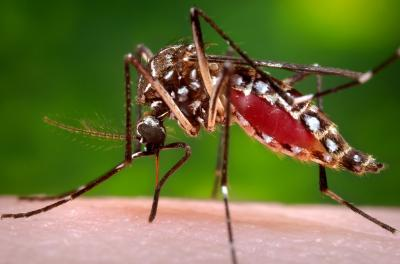 Mosquitos And Public Health: Prevention For The General Public