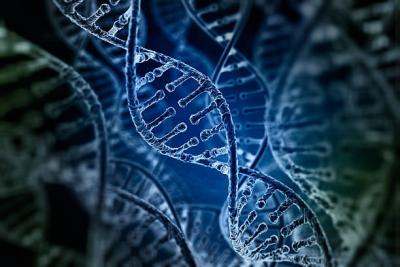 The Basics Of Dna