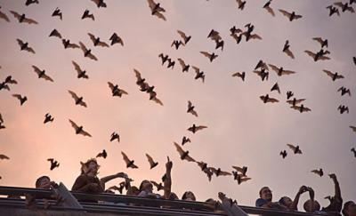 The Mysterious World Of Bats