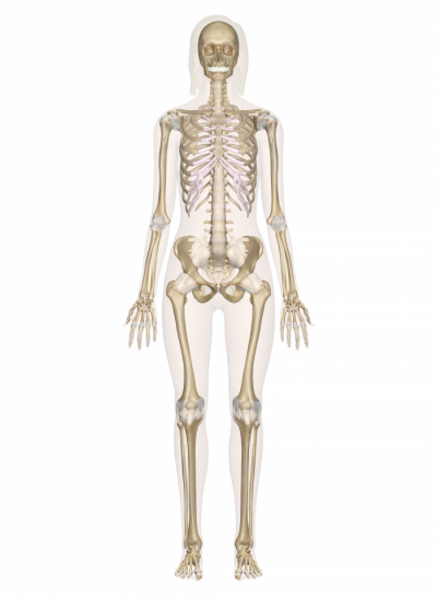 Anatomy And Physiology Webquest