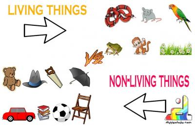 Living Thing And Non-Living Things