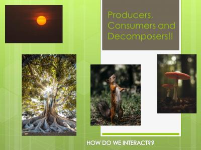 Producers, Consumers And Decomposers Role In A Community Ecosystem
